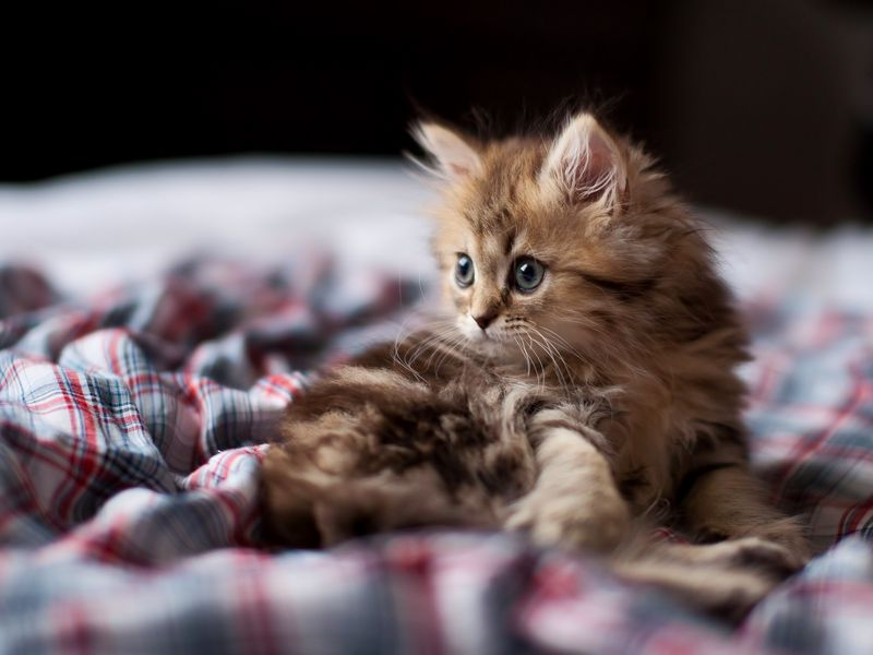 каких котят лучше заводить дома