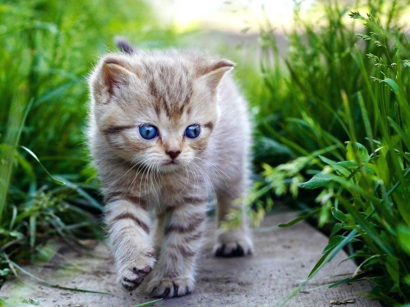 какого котенка лучше завести детям