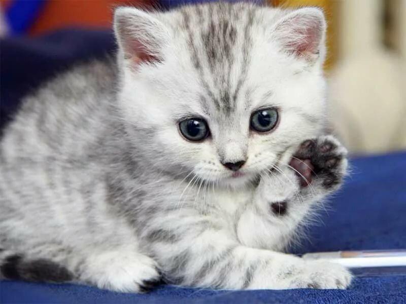 как можно завести котенка