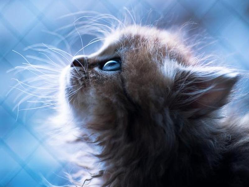 завести котенка во сне