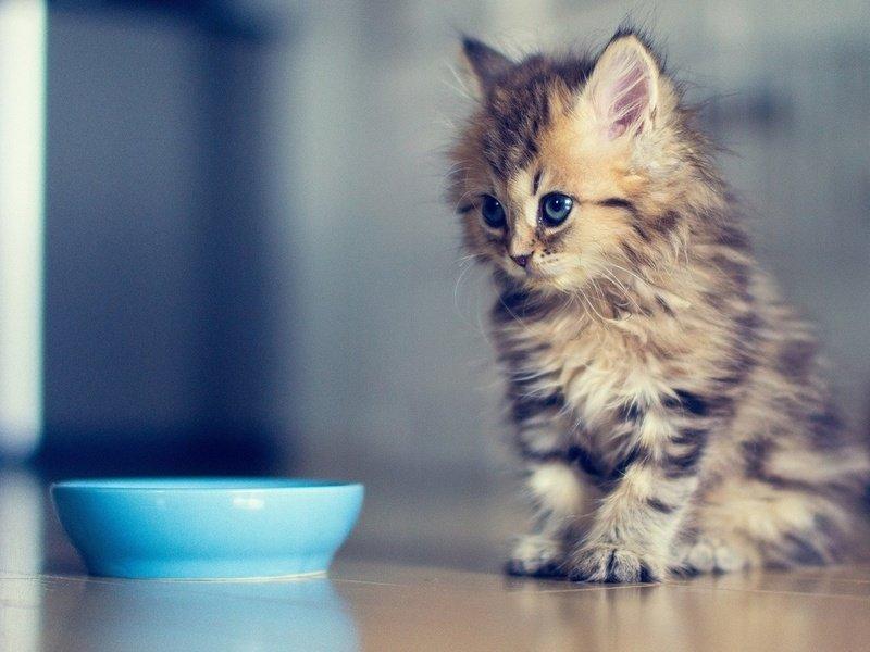 примета завести котенка
