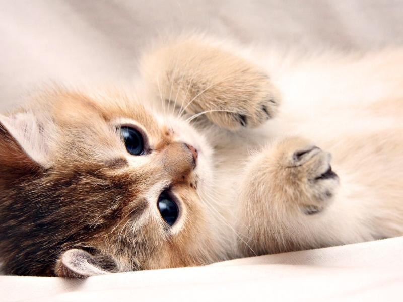 как завести маленького котенка