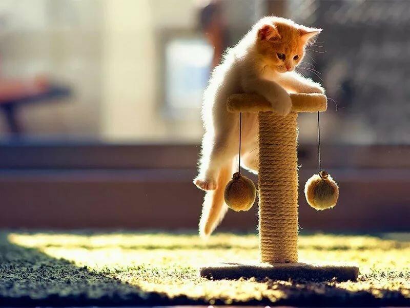 адаптация котенка в новом доме рекомендации