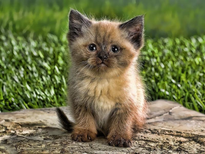какого цвета котенка лучше завести в квартире