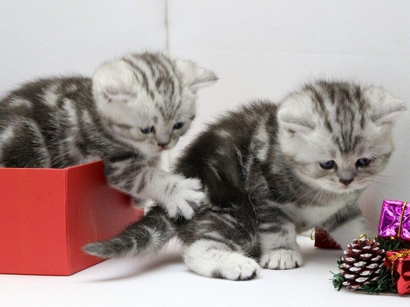 много котят фотографии