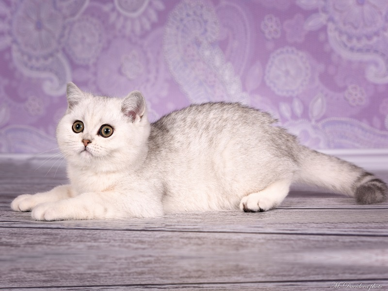 котенок 2 месяца много