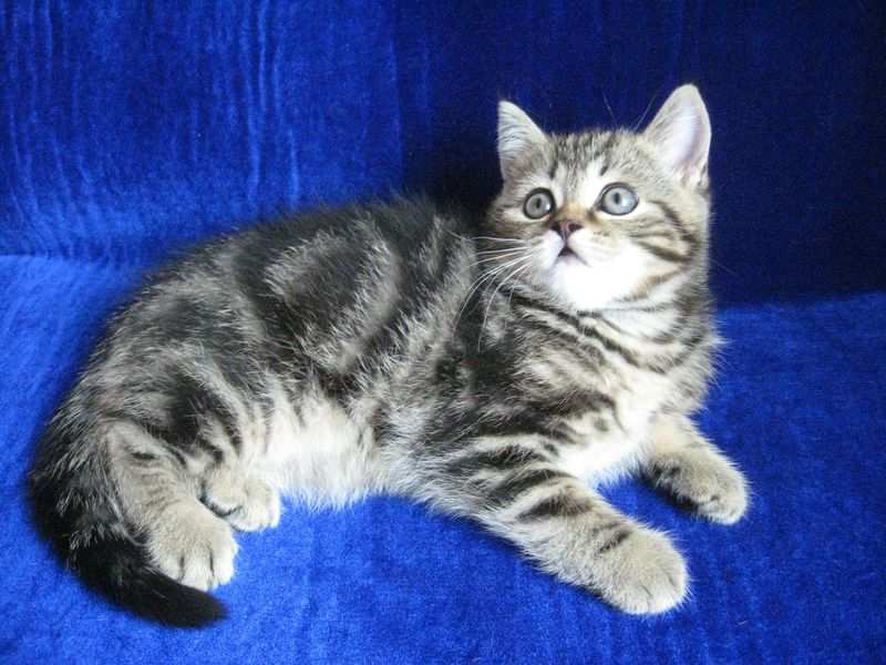 сонник котята маленькие много разноцветные