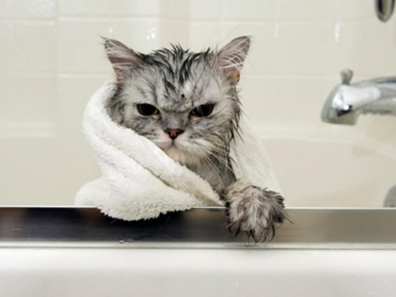 сетка для купания кошек