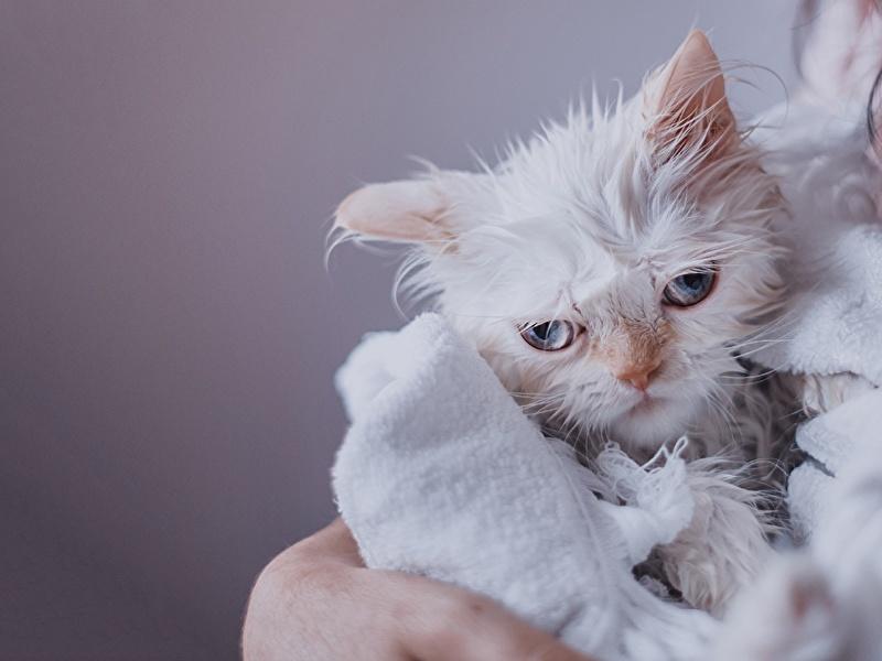 кошки жизнь животных