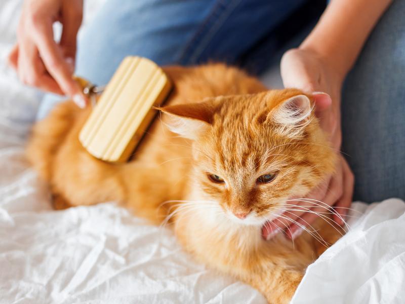 животные породы кошек