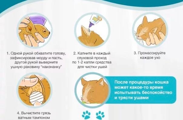 любимое животное кошка